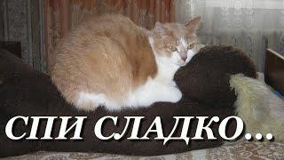 В память любимоиу коту Савве... спи сладко...(Пятлин-Печора)
