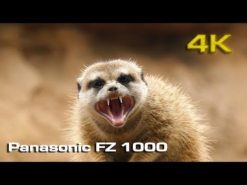 Panasonic Lumix FZ-1000 [4K] Sample video