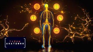 Тайны анатомии. Нервная система