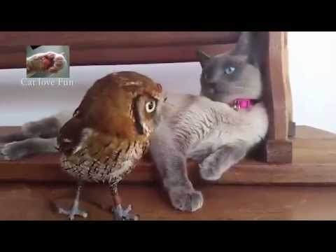 Best Cat compilation with other animals-friends