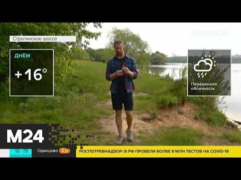 Теплая погода ожидается в Москве 26 мая - Москва 24