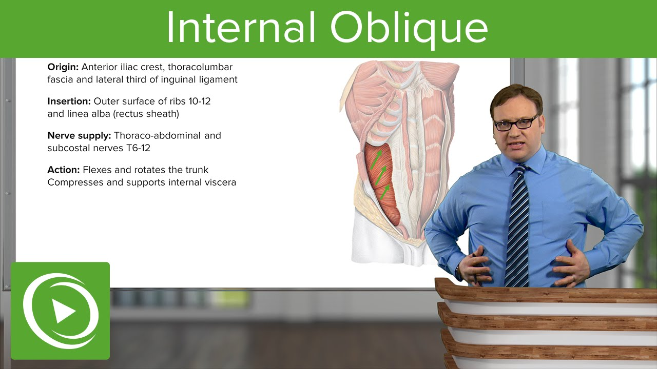Internal Oblique Muscle – Anatomy | Lecturio