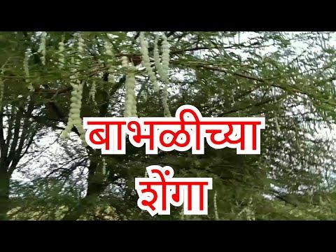Kamshakti ,kamvasna ,рдХрд╛рдордЙрддреНрддреЗрдЬрдирд╛,рдХрд╛рдорд╢рдХреНрддреА  рдмрд╛рднрд│,рдмрд╛рднрд│реАрдЪреНрдпрд╛ рд╢реЗрдВрдЧрд╛,Ayurvedic treatment,рдЖрдпреБрд░реНрд╡реЗрджреАрдХ рдФрд╖рдз