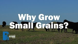 Why Grow Small Grains?
