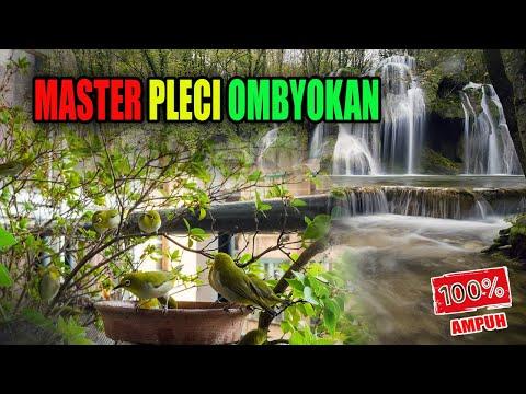 Master Pleci Ombyokan