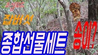섭이의 산 이야기-초심모드 버섯산행-잡버섯 종합선물세트…