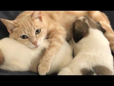 L'istinto Materno Di Mamma Gatta Che Allatta 4 Cagnolini Dopo Aver Perso I Suoi Cuccioli
