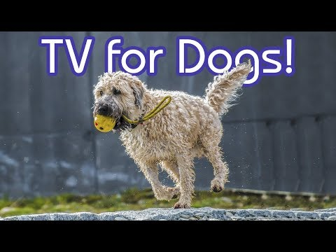 TV for Dogs: Chill Your Dog Out with Relaxing Bird Footage!
