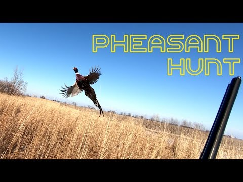 Pheasant Hunting Hunt Club
