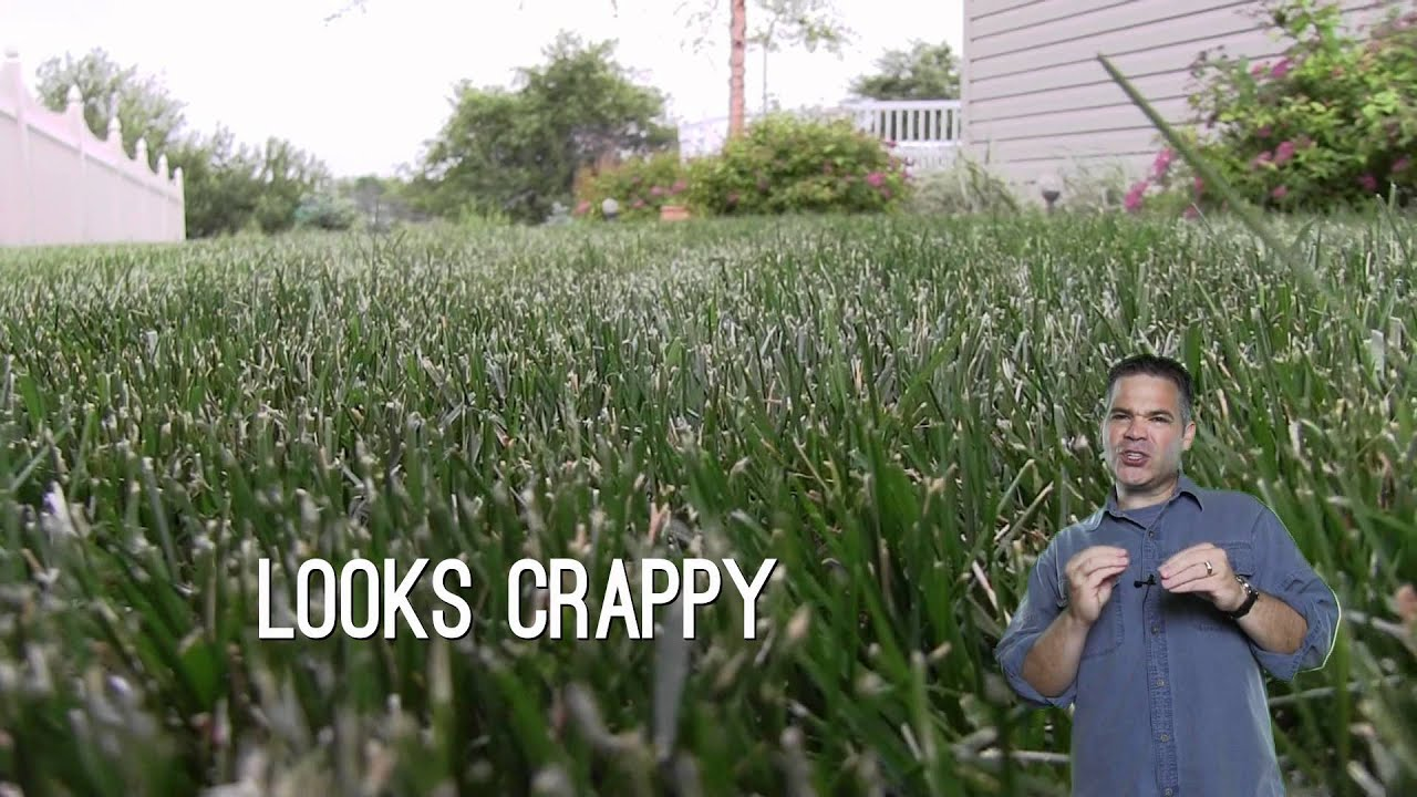 Dull Mower Blade Ripped And Shredded Grass Blades Youtube