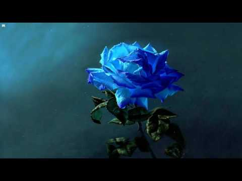 Skrux - Blue Rose