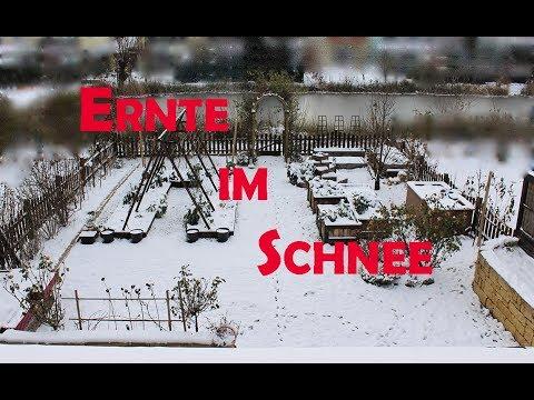 Garten im Dezember / Ernte im Schnee
