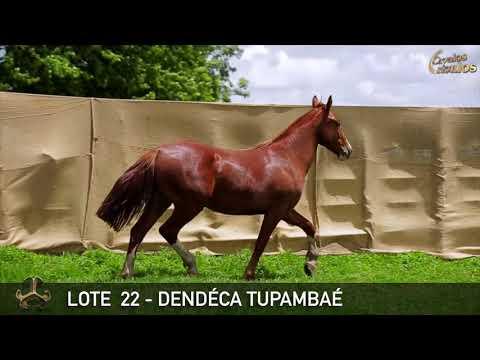 LOTE 22   DENDÉCA TUPAMBAÉ