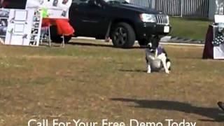 Southwest K9 Academy Dog Training At The Park