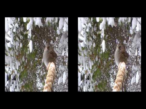 Речные Феи. 3D stereoscopic. Эротика. Ню. Фотосессия на природе from YouTube