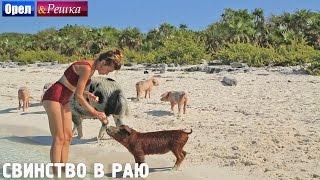 Багамские свинки!  Орёл и Решка. Рай и Ад