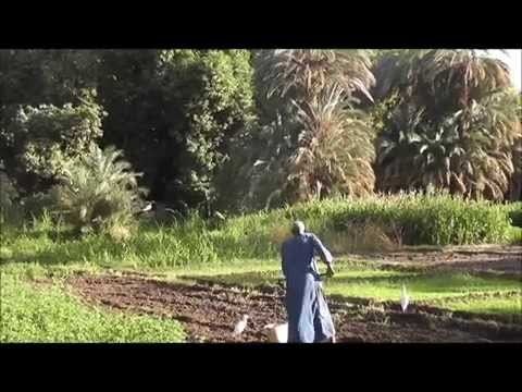 Nubian Farmer working on Elephantine island, Aswan, Egypt