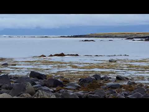 Robben vor Island Teil 1