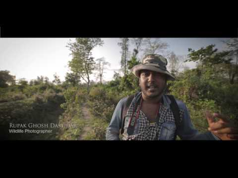 A day into the wild - A Buxa Tiger Reserve Documentry
