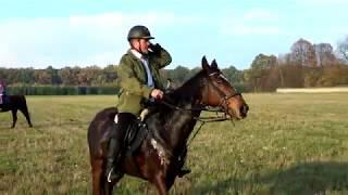 Happy Horse - Hubertus 2017 - pogoń za lisem
