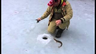видео Зимняя ловля на балансир