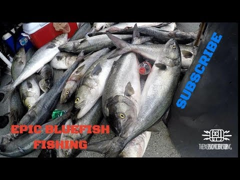 EPIC BLUEFISH FISHING TRIP - MISS BELMAR PRINCESS, NEW JERSEY