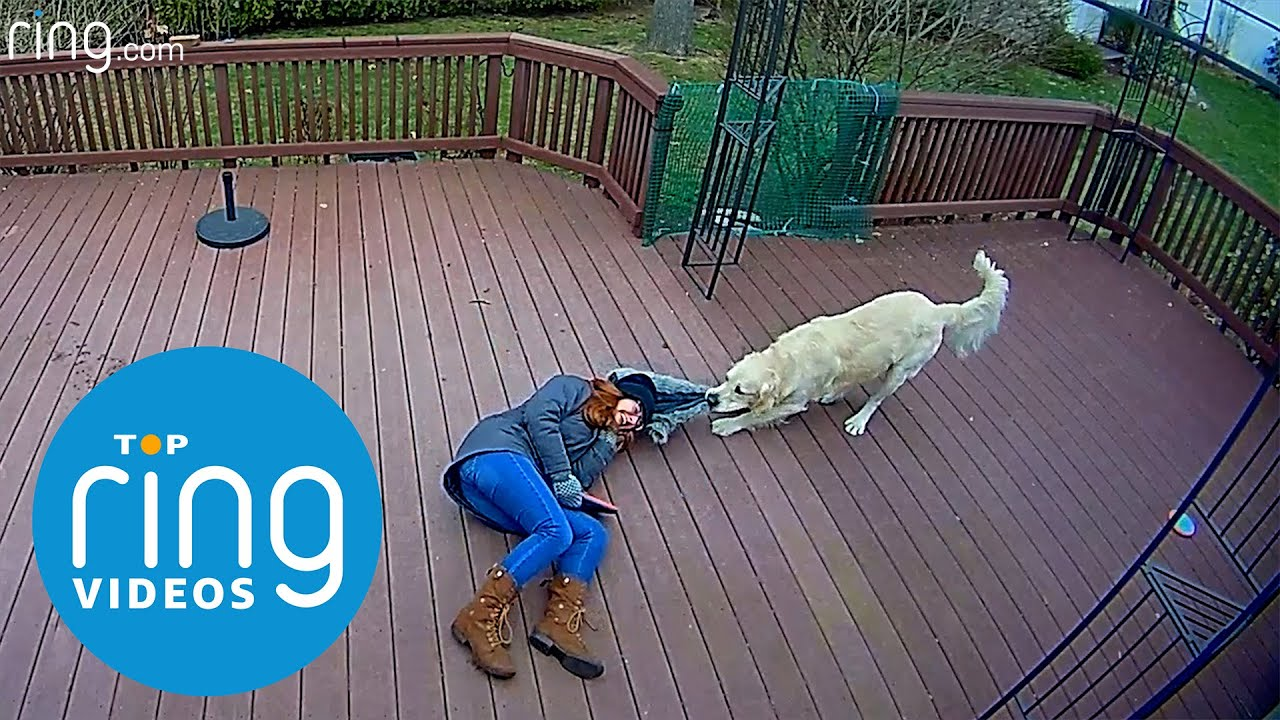 Top Ring Videos: Dog Takedowns, Bird Chase, Donut Squirrel & Trick Shots