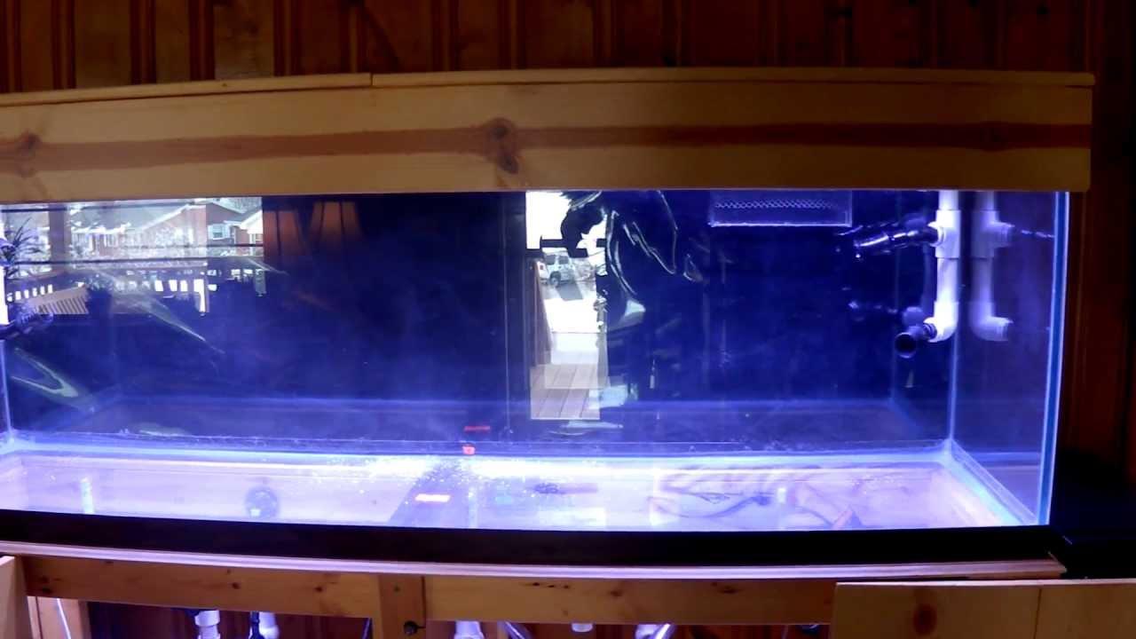 & 125 Gallon Reef Aquarium Setup 8 LED Lighting Installed.MP4 - YouTube