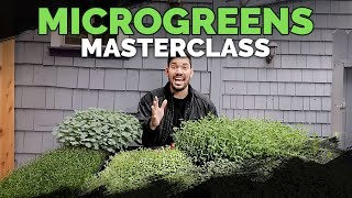 How to Grow Microgreens from Start to Finish (COMPLETE GUIDE)