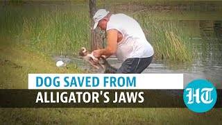 Watch: Florida man pries open jaws of alligator barehanded, rescues puppy