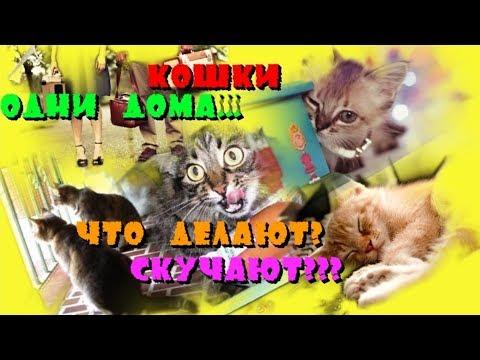 Вопрос: Думаете кошкам скучно ли целыми днями в квартире без прогулки?