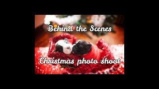 Puppies behind the scenes Christmas photo shoot | Cavalier King Charles Mix