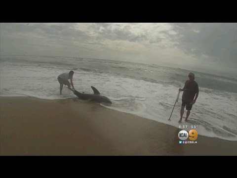 Warning Issued After Shark Hooked Off Sunset Beach