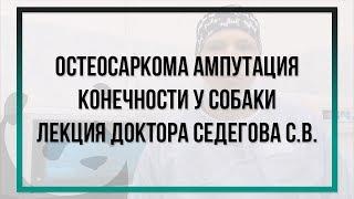 Остеосаркома  Ампутация конечности у собаки - лекция доктора Седегова С.В.