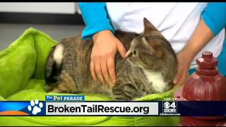 Pet Parade  Broken Tail Rescue In Worcester  laquo; CBS Boston
