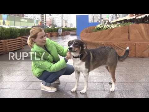 Russia: Never lose your dog again - Mishiko shows off its new pet tracking device