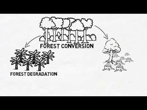 Biodiversity conservation in multiple-use forest landscapes in Sabah