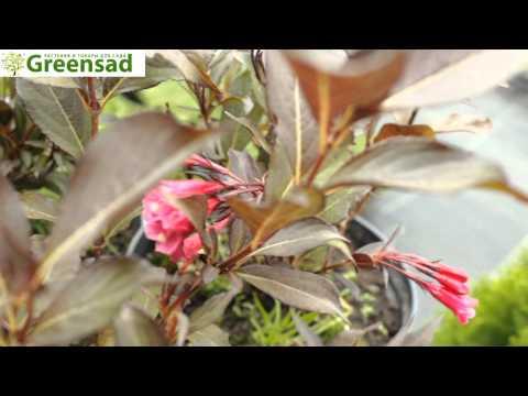 Канзаши Базар Интересная Новостьиз YouTube · Длительность: 2 мин57 с  · Просмотры: более 12.000 · отправлено: 29.01.2014 · кем отправлено: Alina Boloban