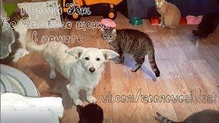 Первый день бездомного щенка в приюте | Puppy in an animal shelter