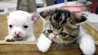 Cat Gives Birth To A Dog