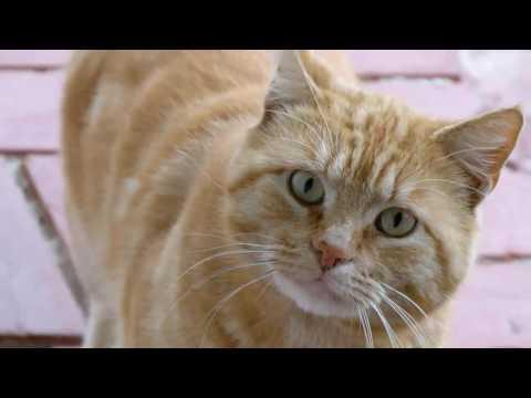 Cat Sounds! --- CAT COMPILATION
