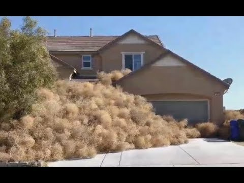 Tumbleweeds Take Over Town