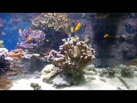 Aquarium at hub Penn state