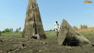 Amazing Hands Fishing Searching Catch Fish Underground Secret Hole in Dry Season