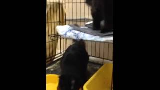 котята Макс и Агата, 6 месяцев