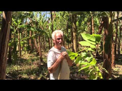 Finca Cazador - Growing Cacao in Panama