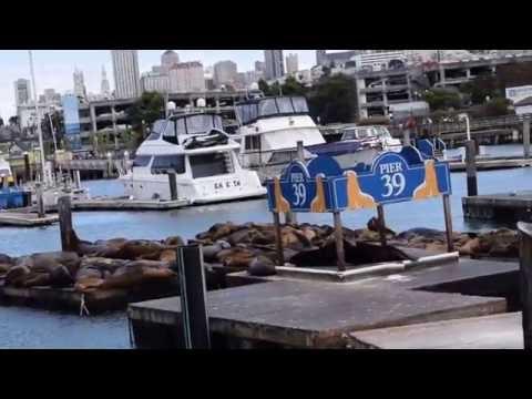 Pier 39 Tour - San Francisco, CA