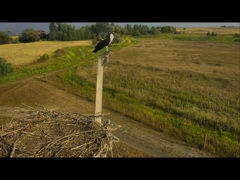 Osprey Nest - Charlo Montana Cam 08-31-2017 16:44:28 - 17:44:28
