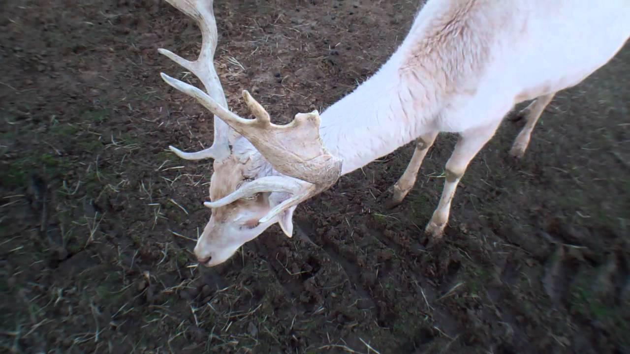 deer isle lesbian personals Amber jones had a double and two singles for six rbis,  deer isle deer isle 348-5646 367-5521  deer isle-stonington mariners.