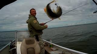 Рыбалка на щуку, окуня и судака на озере Лукомское